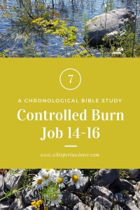 Link to a Bible Study Blog Post #7 - Controlled Burn