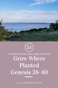 Link to a Bible Study Blog Post #24 - Grow Where Planted